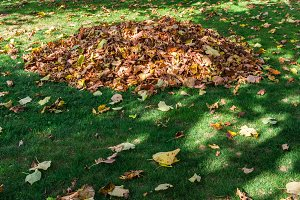 Collected leaves in the garden