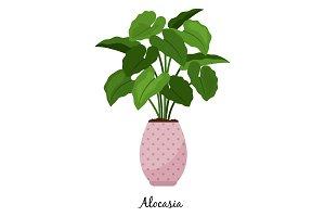 Alocasia plant in pot icon