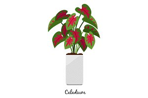 Caladium plant in pot icon