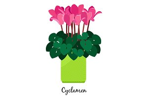 Cyclamen plant in pot icon
