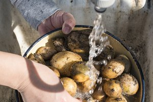 Wash potatoes in home garden
