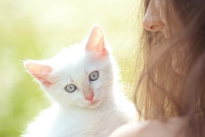 little white cat
