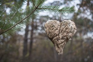 Heart shape on tree