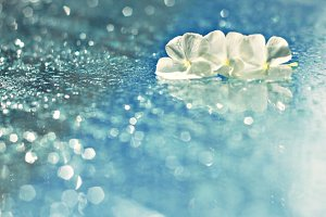 Petals in the sparkles