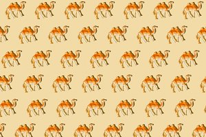 Camel repeated figure