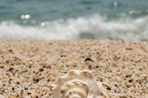 beautiful seashell on the small pebble beach