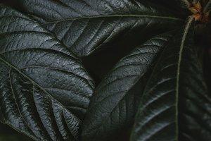 Dark and Moody Leaf Closeup