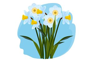 Bouquet of fresh aromatic daffodils of light blue color
