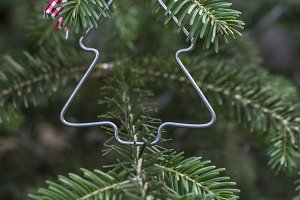 Christmas tree shape on real fir