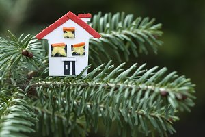 House miniature on fir tree