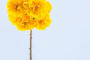 yellow flowers on summer