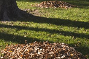 Piles of autumn leaves