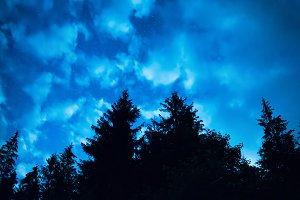 forest with blue night sky