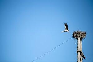 Stork flying in sky
