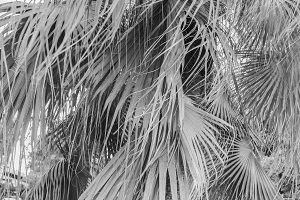 Background Tree