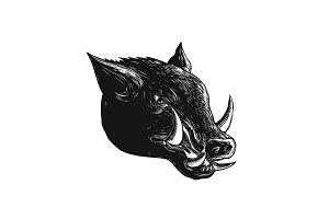Razorback Wild Boar Scratchboard