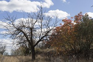 Tree in autumn in Bogarra