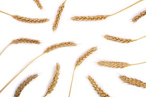 ears of wheat isolated on white background. Top view. Flat lay pattern