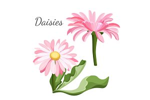 Daisy flower with green leaves closeup realistic vector