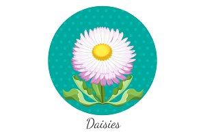 Daisy flower with green leaves closeup in circle realistic vector