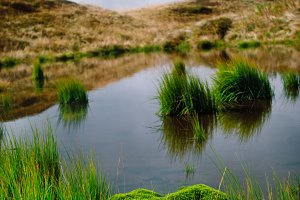 Bog in mountains