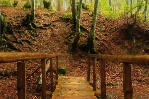 Wooden bridge in autumnal forest
