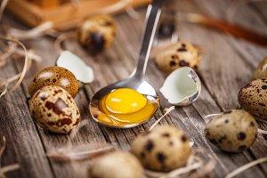 Fresh raw quail eggs
