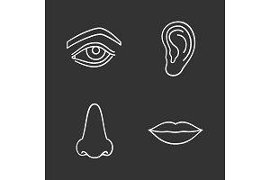 Facial body parts chalk icons set