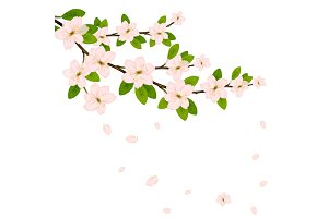 Blooming branch vector with pink spring blossom.