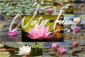15 Water Lilies Background Pack