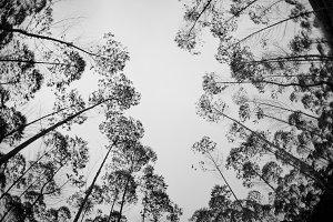 Black Tree (B&W)