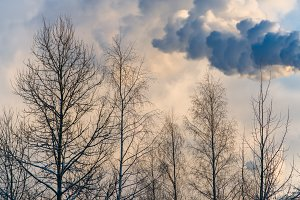 industrial smoke poisons nature every day