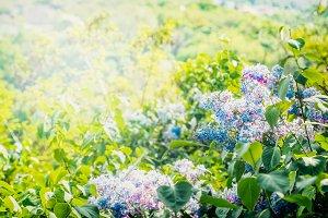 Lovely summer dandelion flowers