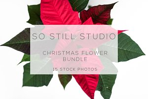 Christmas flower stock photo bundle