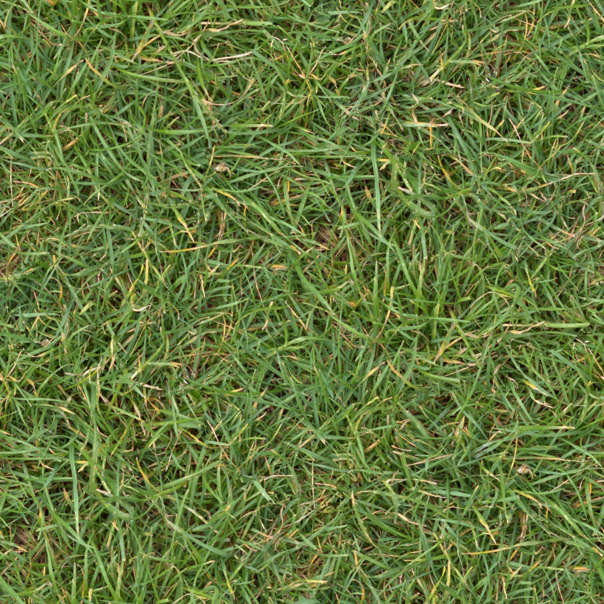 Grass Texture Tileable 2048x2048 ~ Textures ~ Creative Market
