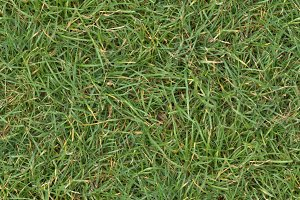Grass Texture Tileable 2048x2048