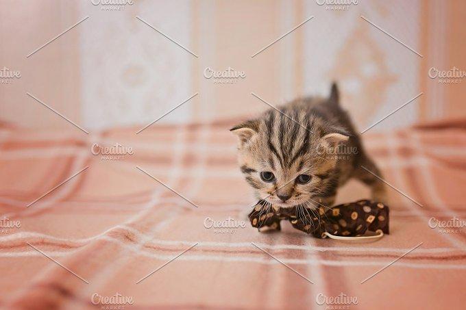Kitty - Animals