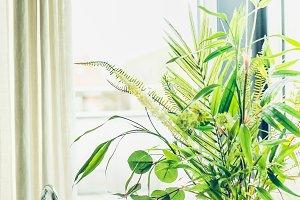 Bathroom green indoor plants