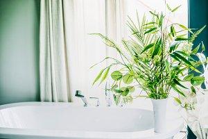 Green indoor plants in bathroom