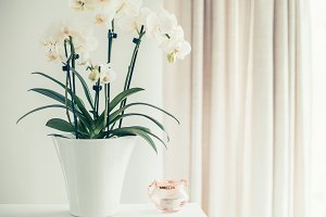 White orchid plant at window