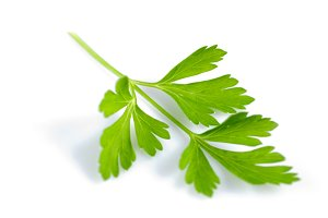 Parsley isolated