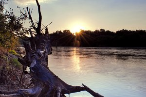 Fallen tree on the river