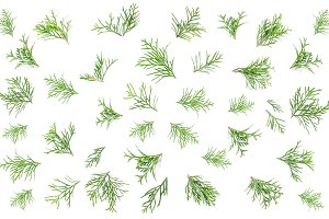 Coniferous branches Flat lay