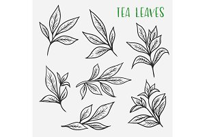 Sketches of green or black tea sprout with leaves
