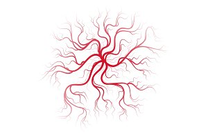 Human blood veins