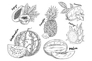 Sketched of watermelon and pitahaya fruits
