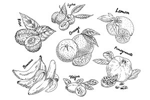 Sketches of banana, pomegranate and kiwi, orange