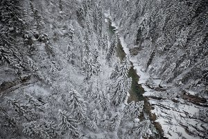 Snowy forest and river