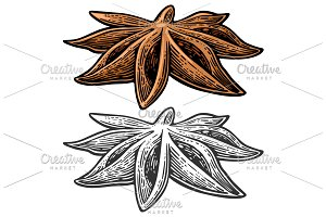 Anise spice fruit with seed