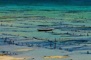 Low Tide in Paradise